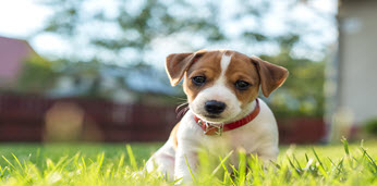 dog-on-grass-thumbnail-image